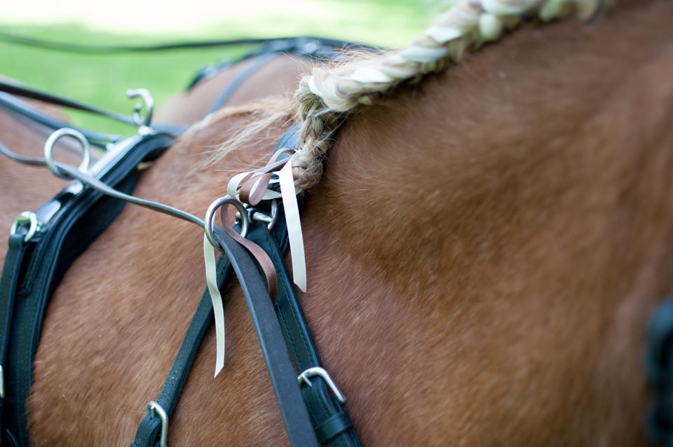 bruiloft met paarden -3889