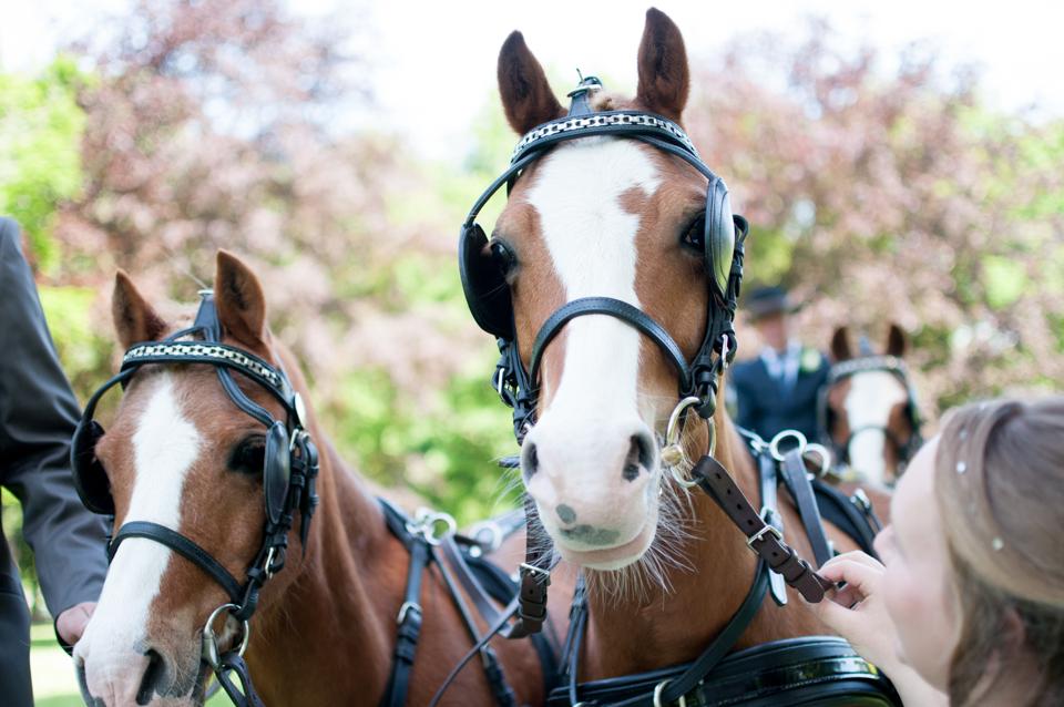 bruiloft met paarden -3910
