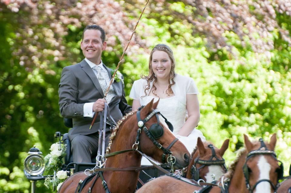 bruiloft met paarden -3967