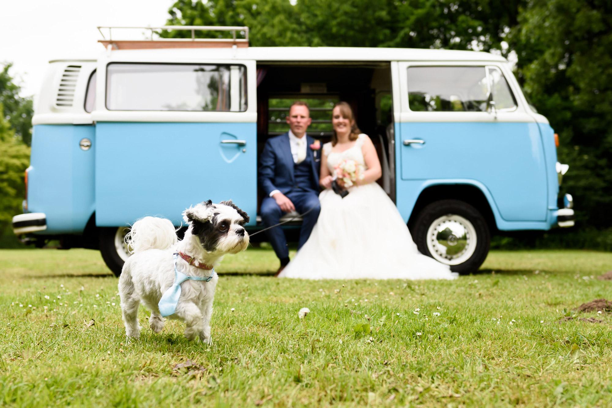 De leukste trouwfoto's met dieren